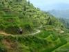 Tarasy ryżowe (2)