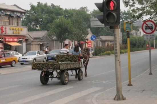 Kon na ulicy w Pekinie